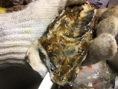 サロマ湖産の殻付き生牡蠣5