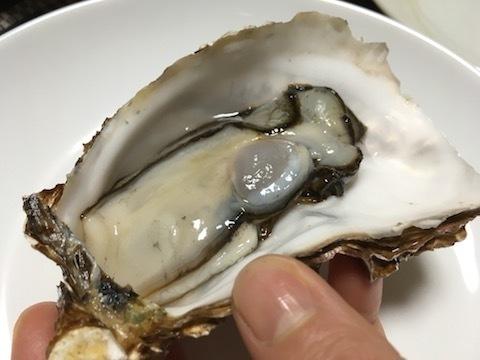 サロマ湖産の殻付き生牡蠣11
