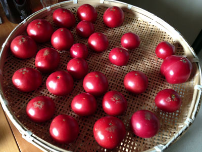 自家製トマトソース用トマト2