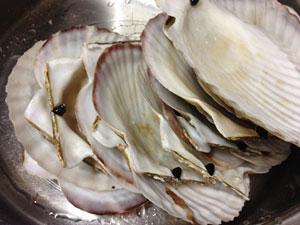 ホタテの貝殻の残骸