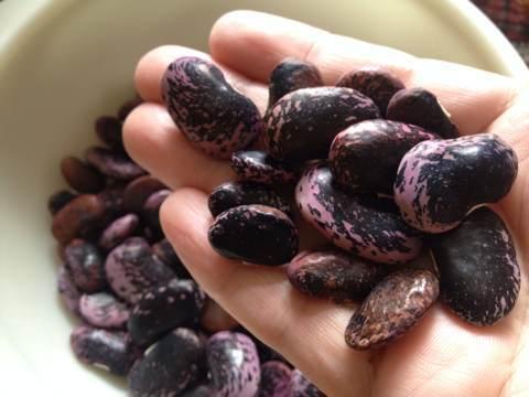 紫花豆img