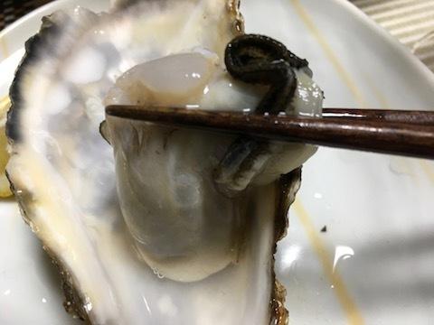 サロマ湖産の殻付き生牡蠣12