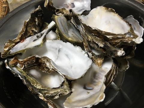 サロマ湖産の殻付き生牡蠣13