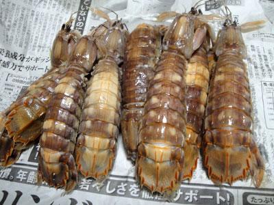 小樽産秋シャコ2