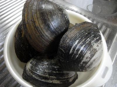 ホッキ貝1